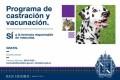 Castración y vacunación gratuita de mascotas en Noviembre